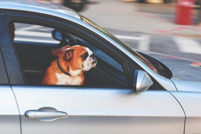 Viajar con perros en el coche